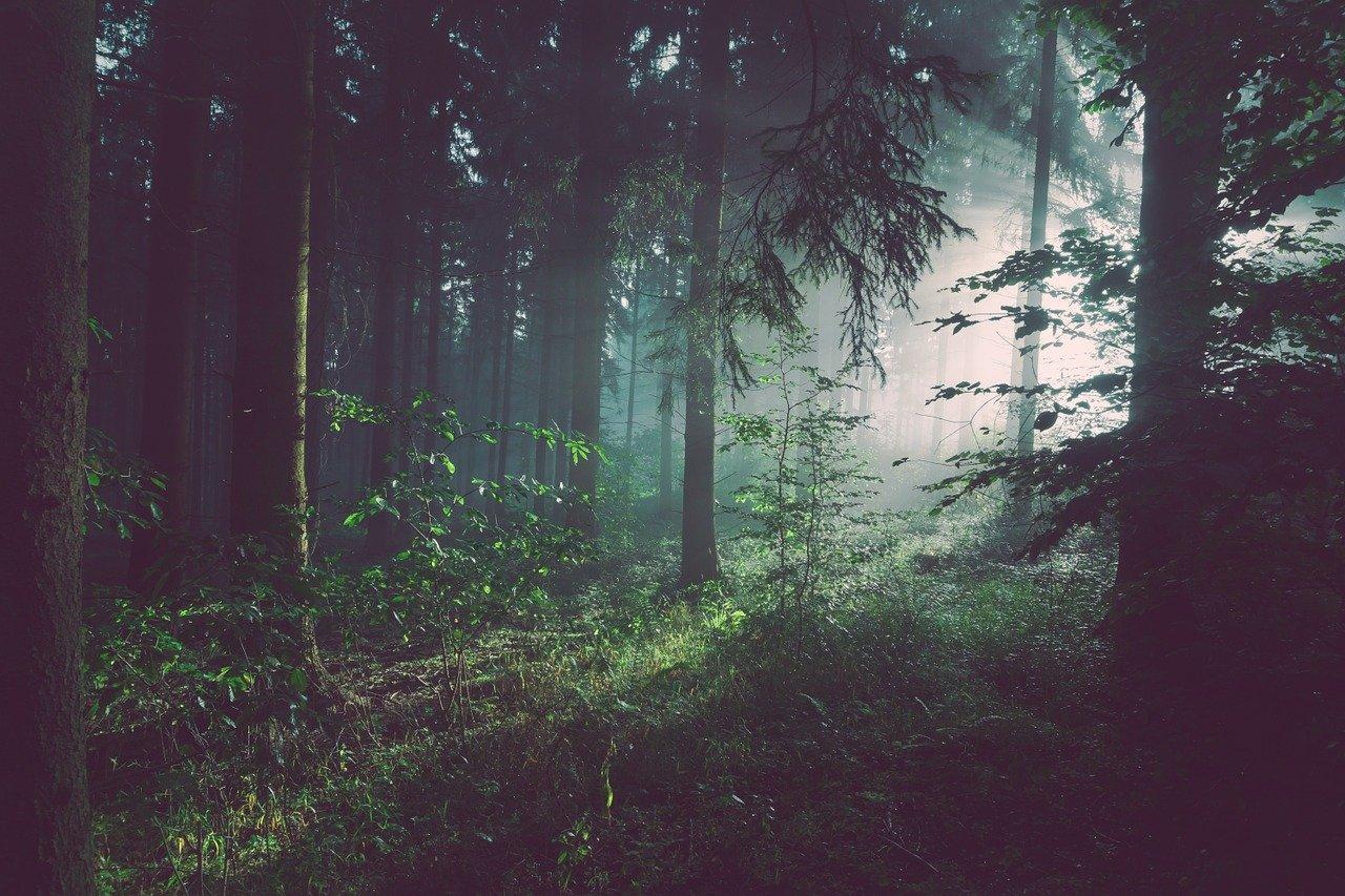 Woodland-insurance